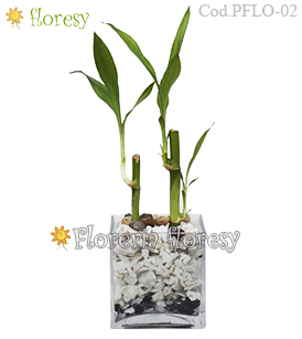 Lucky Bamboo Plant in glass vase